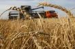 Почти приключва жътвата на пшеница в общината, качеството на зърното е много добро